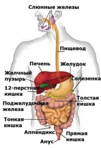 Диагностика и лечение желудочно-кишечного тракта