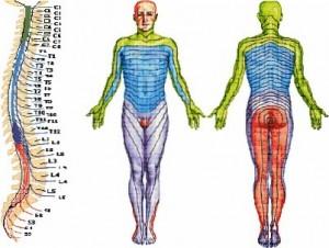 Экспресс оценка состояния человека (сегментарная диагностика)